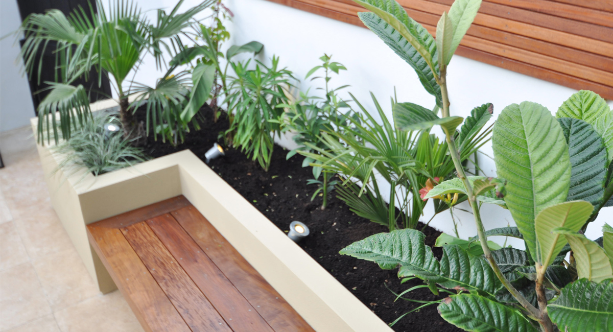 The planting is carefully chosen to complete the ideal Courtyard Garden