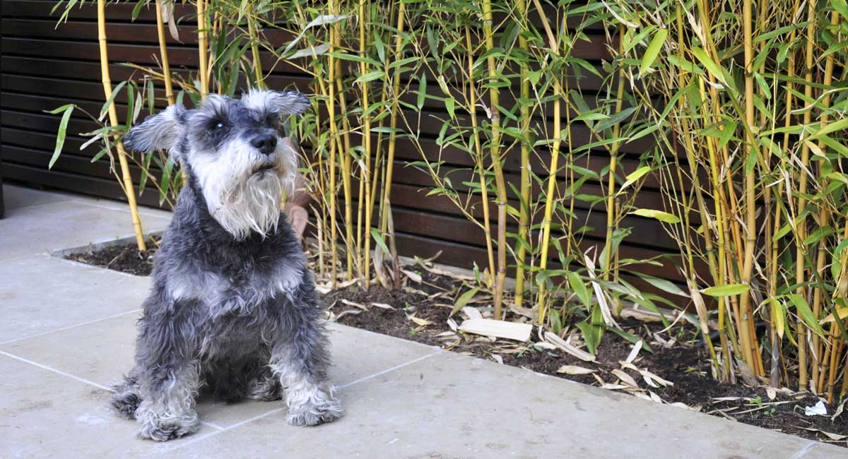 jungle-garden-design-with-dog-in-London.jpg